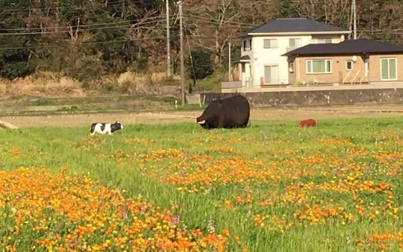 松崎町 お花畑
